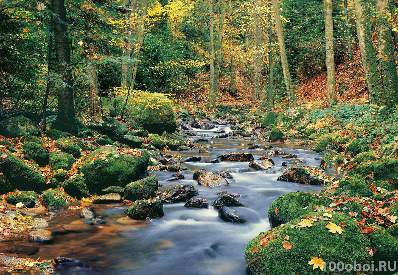 Фотообои на стену «Лесной Ручеек» WG ...: www.100oboi.ru/catalog/fotooboi/wizard_genius/forest_stream_00278...